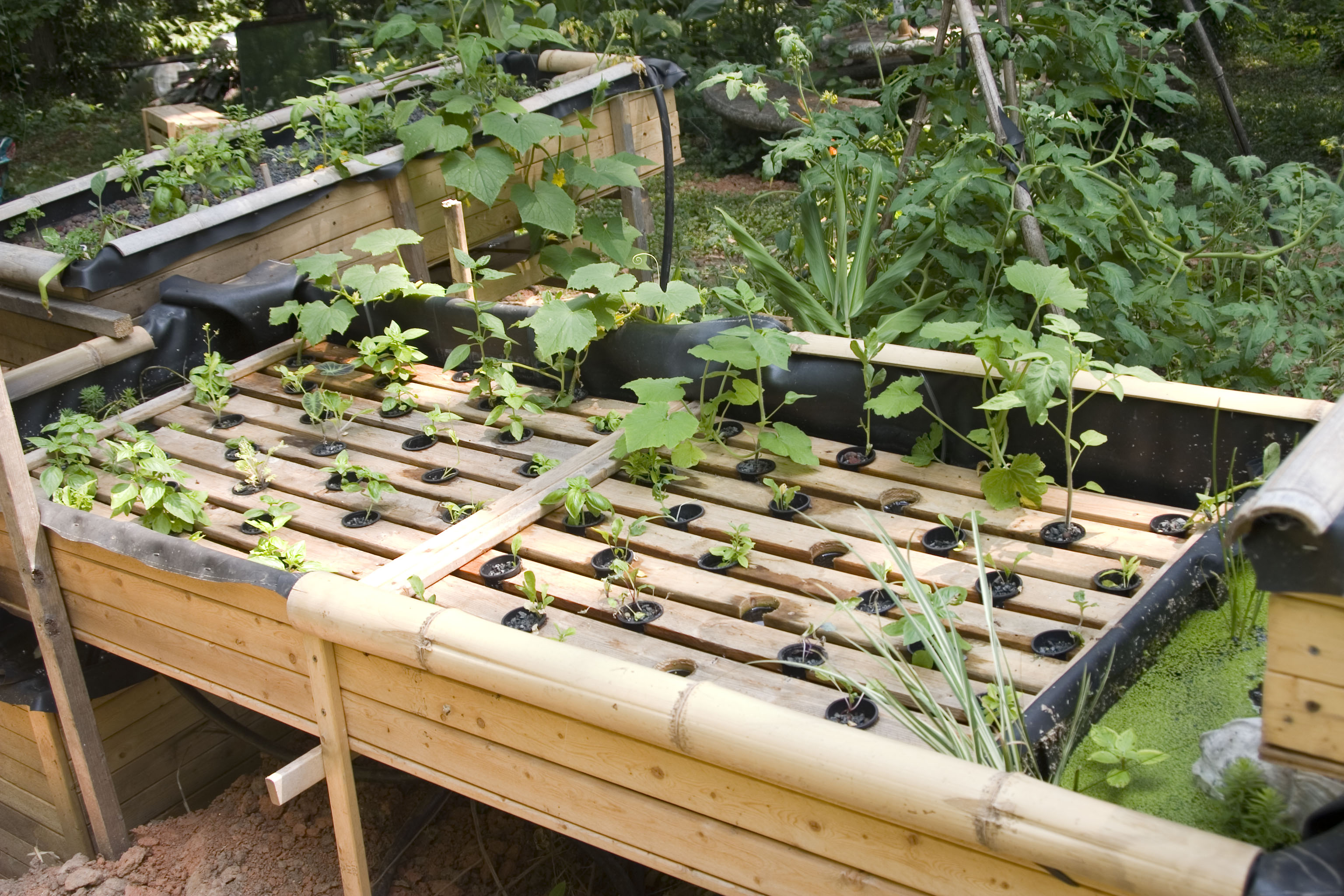 Aquaponics outperforms Organic Hydroponics