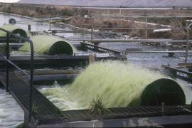 Aquaflow-pond-aeration